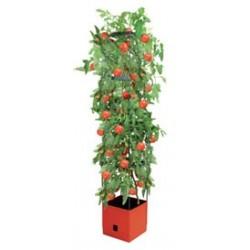 Tour à tomates