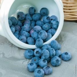 Myrtillier Blue Crop Le conteneur de 1