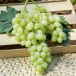 Vigne de Table Centennial Le conteneur de 1