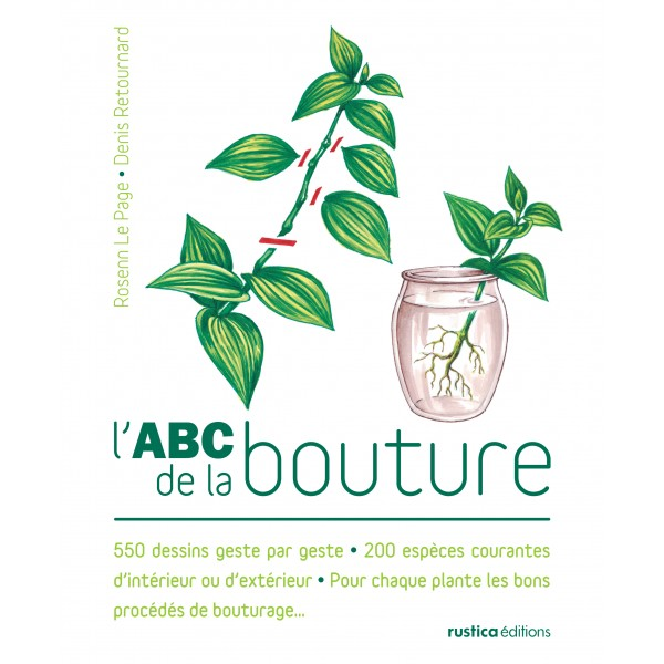 L 39 abc de la bouture for Bouture yucca exterieur
