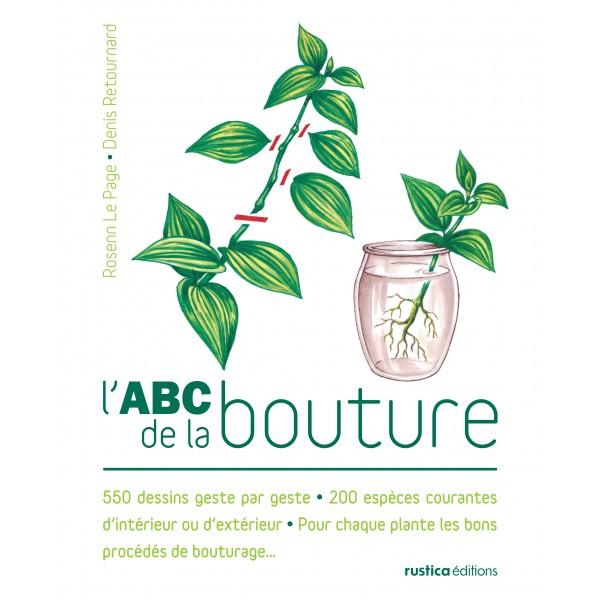 L 39 abc de la bouture for Bouture yucca exterieur