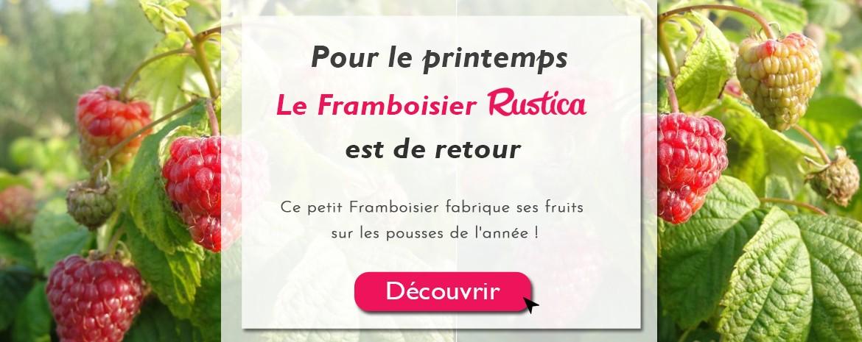 Framboisier Rustica